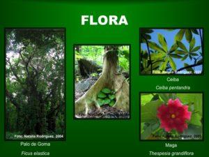 Flora1 BosqueSP