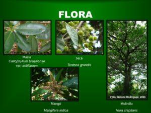 Flora2 BosqueSP