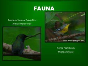 Fauna1 BosqueSP