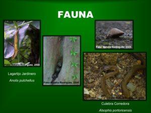 Fauna2 BosqueSP
