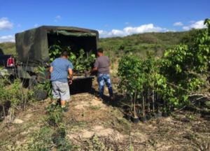 reforestacion2