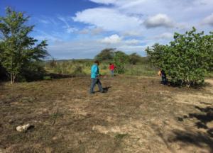 reforestacion3