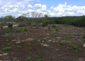reforestacion6